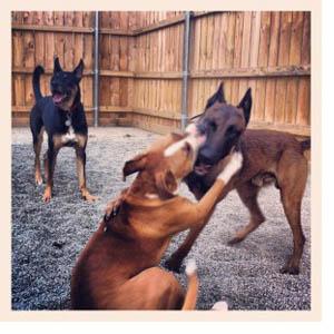 DOG HANGING CAR SIGN with Rubber Sucker 93 brown dog Doberman